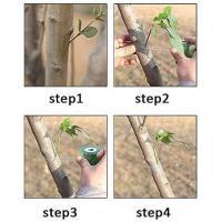 Picture of Kathson 4Pcs 330Ft Grafting Tape Garden Tree Nursery Graft Tape