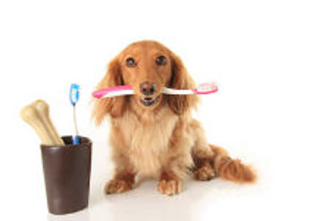 Picture for category Pet Health Care & Hygiene