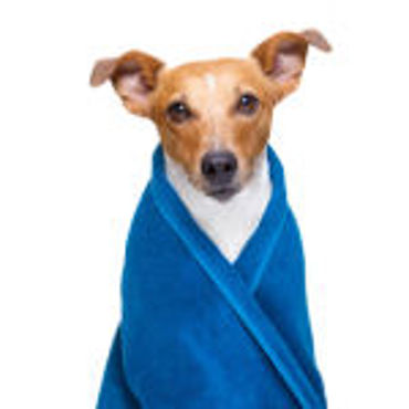 Picture for category Pet Skin Care