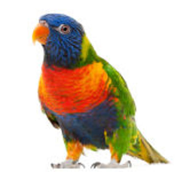 Picture for category Bird Supplies