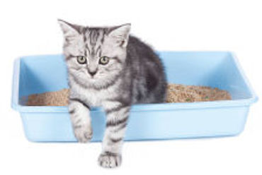 Picture for category Cat Litter Boxes