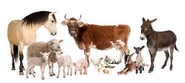 Picture for category Farm Animal Supplies