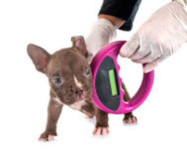 Picture for category Pet Microchips