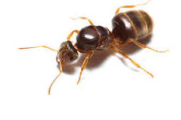 Picture for category Insect Supplies