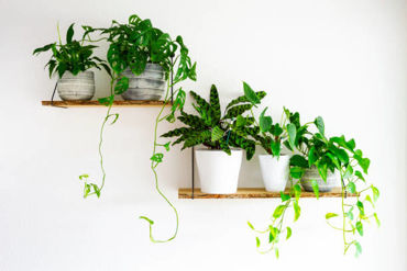 Picture for category Plant Shelves